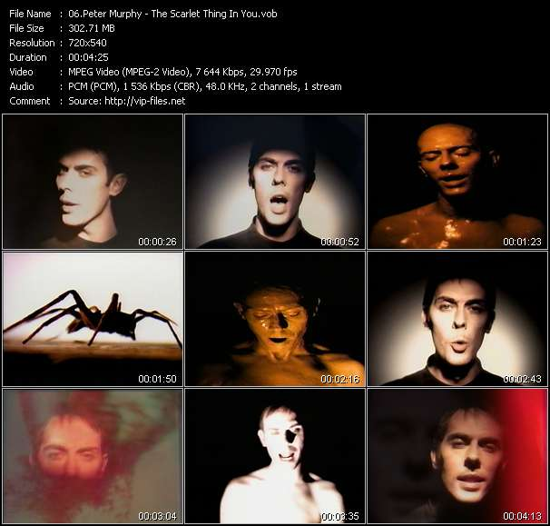 Peter Murphy - The Scarlet Thing In You